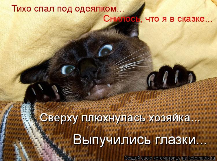 Котоматрица: Тихо спал под одеялком... Сверху плюхнулась хозяйка... Выпучились глазки... Снилось, что я в сказке...