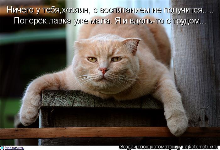 Котоматрица: Ничего у тебя,хозяин, с воспитанием не получится.....  Поперёк лавка уже мала. Я и вдоль-то с трудом...