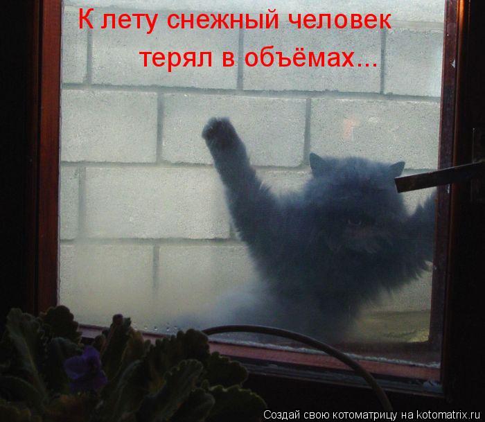 Котоматрица: К лету снежный человек терял в объёмах...