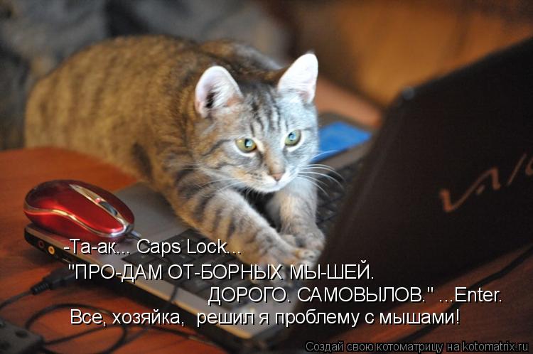 """Котоматрица: """"ПРО-ДАМ ОТ-БОРНЫХ МЫ-ШЕЙ.   -Та-ак... Caps Lock...   Все, хозяйка,  решил я проблему с мышами!  ДОРОГО. САМОВЫЛОВ."""" ...Enter."""
