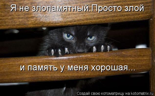 Котоматрица: Я не злопамятный.Просто злой и память у меня хорошая...