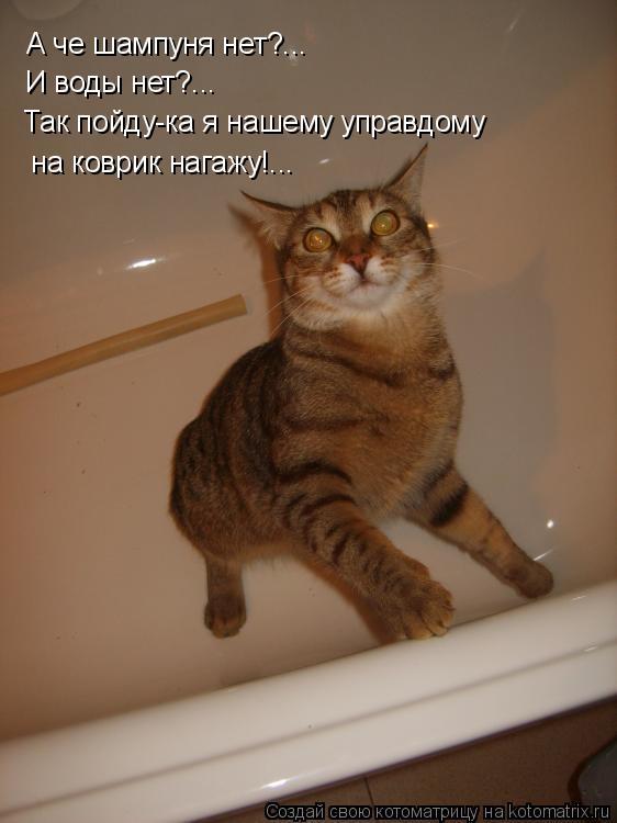 Котоматрица: А че шампуня нет?... И воды нет?... Так пойду-ка я нашему управдому  на коврик нагажу!...