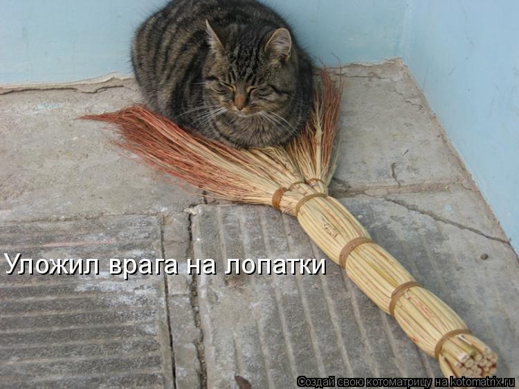 Котоматрица: Уложил врага на лопатки