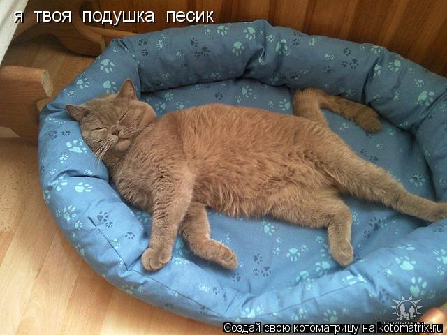 Котоматрица: я  твоя  подушка  песик