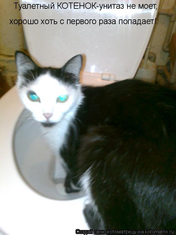 Котоматрица: Туалетный КОТЕНОК-унитаз не моет, хорошо хоть с первого раза попадает!