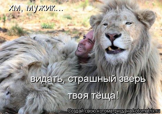 Котоматрица: хм, мужик... видать, страшный зверь  твоя тёща!