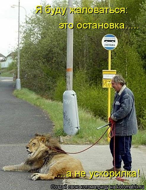 Котоматрица: Я буду жаловаться: это остановка..... ....а не ускорилка!