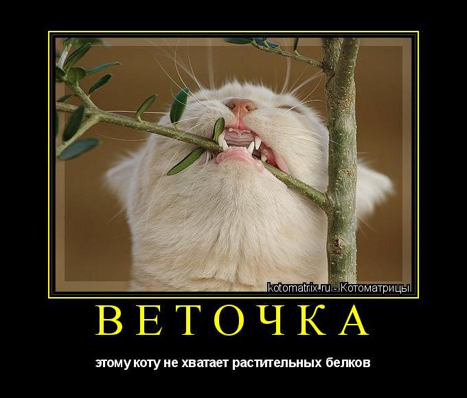 Котоматрица: веточка этому коту не хватает растительных белков