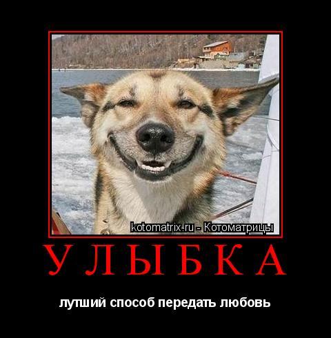 Котоматрица: улыбка  лутший способ передать любовь