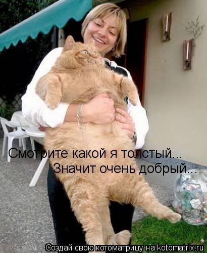 Котоматрица: Смотрите какой я толстый... Значит очень добрый...