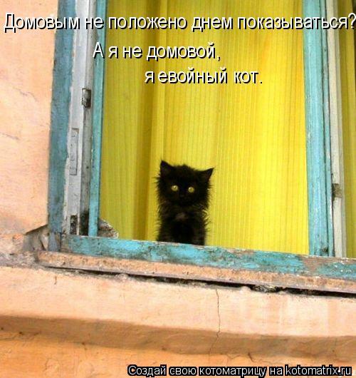 Домовым не положено днем показываться? А я не домовой,  я евойный кот.