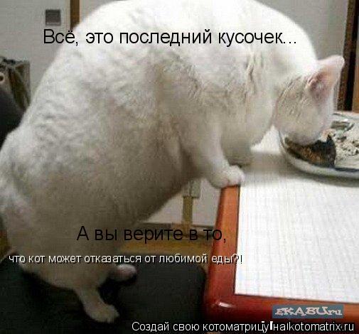 Котоматрица: Всё, это последний кусочек... А вы верите в то, что кот может отказаться от любимой еды?!