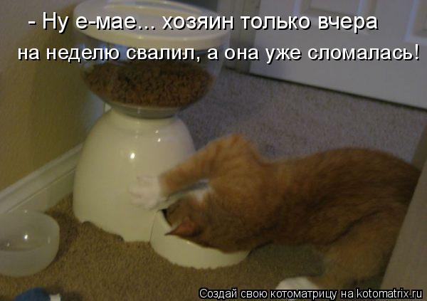 Котоматрица: - Ну е-мае... хозяин только вчера  на неделю свалил, а она уже сломалась!