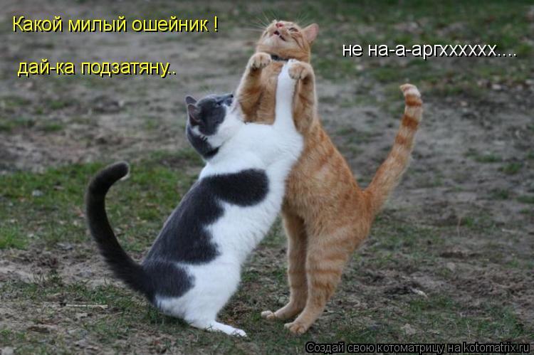 Котоматрица: Какой милый ошейник ! дай-ка подзатяну.. не на-а-аргхххххх....