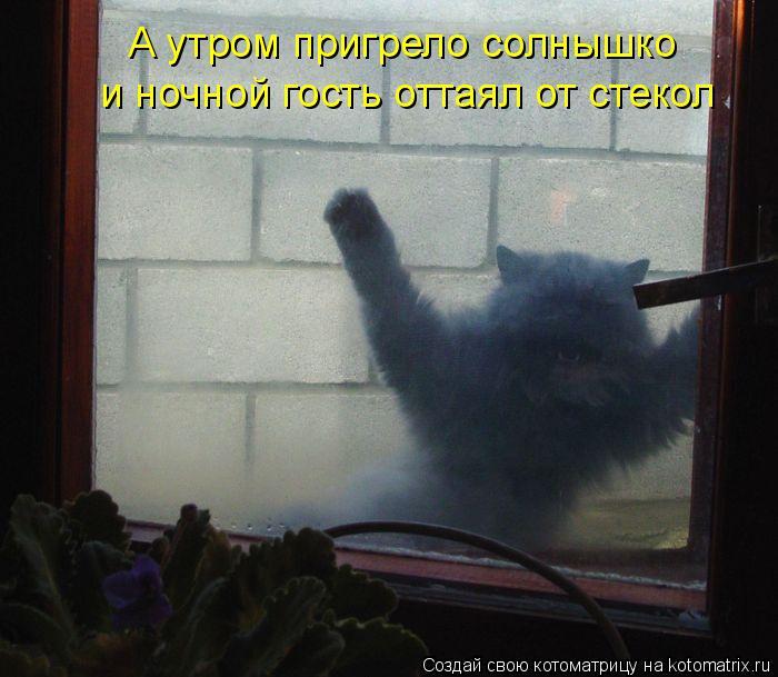 А утром пригрело солнышко и ночной гость оттаял от стекол