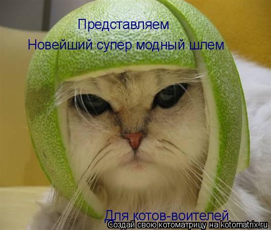 Котоматрица: Новейший супер модный шлем Для котов-воителей Представляем
