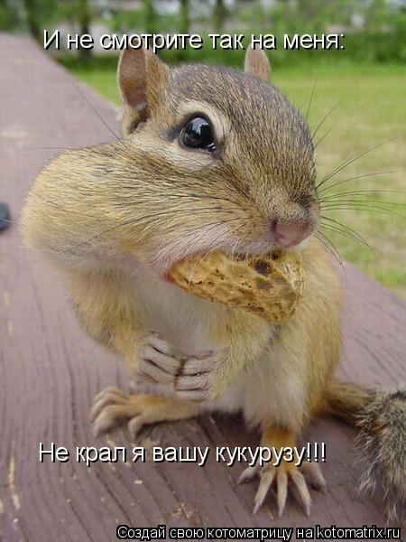Котоматрица: И не смотрите так на меня: Не крал я вашу кукурузу!!!