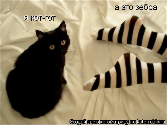 Котоматрица: я кот-гот а это зебра