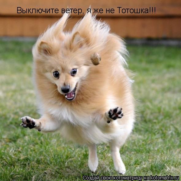 Котоматрица: Выключите ветер, я же не Тотошка!!!