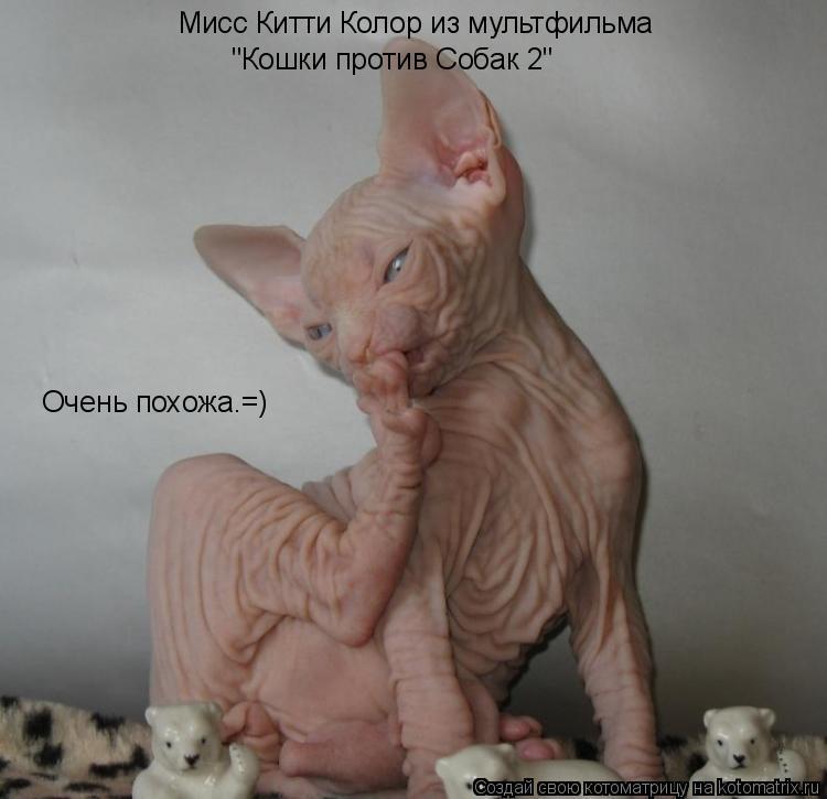 """Котоматрица: Мисс Китти Колор из мультфильма   """"Кошки против Собак 2"""" Очень похожа.=)"""