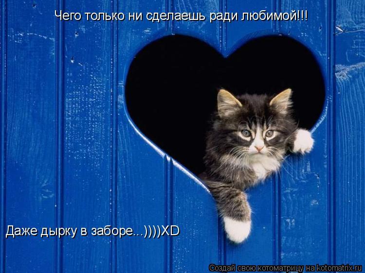 Котоматрица: Чего только ни сделаешь ради любимой!!! Даже дырку в заборе...))))XD