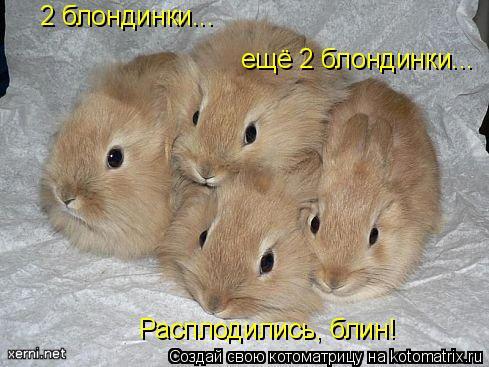 Котоматрица: 2 блондинки... ещё 2 блондинки... Расплодились, блин!