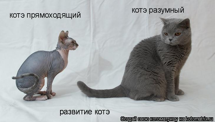 картинки смешные животных  про очень