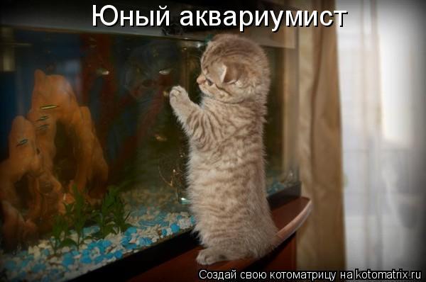 Котоматрица: Юный аквариумист
