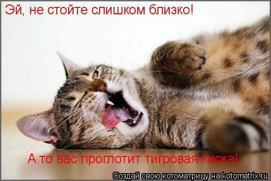 Котоматрица: Эй, не стойте слишком близко! А то вас проглотит тигровая киска!