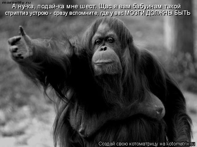 Котоматрица: А ну-ка, подай-ка мне шест. Щас я вам бабуинам такой  стриптиз устрою - сразу вспомните, где у вас МОЗГИ ДОЛЖНЫ БЫТЬ