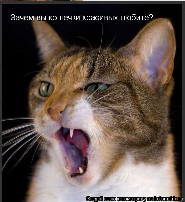 Котоматрица: Зачем вы кошечки,красивых любите?