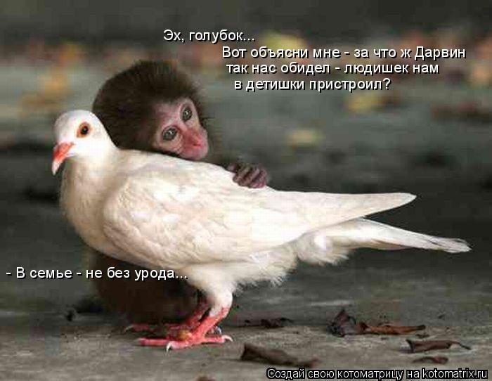 Котоматрица: Эх, голубок...  Вот объясни мне - за что ж Дарвин  так нас обидел - людишек нам  в детишки пристроил? - В семье - не без урода...