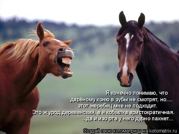 Котоматрица: Я конечно понимаю, что  дарёному коню в зубы не смотрят, но.... этот жеребец мне не подходит. Это ж урод деревенский, а я кобылка аристократичн
