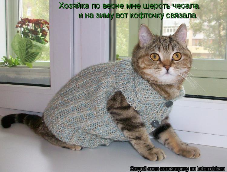 Котоматрица: Хозяйка по весне мне шерсть чесала, и на зиму вот кофточку связала.
