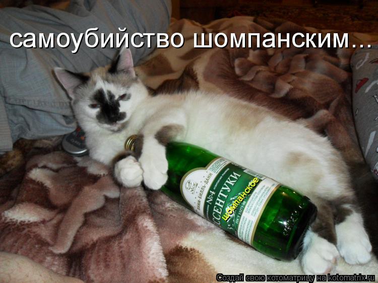 Котоматрица: самоубийство шомпанским... шомпанское