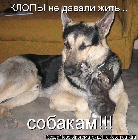 Котоматрица: КЛОПЫ не давали жить... собакам!!!