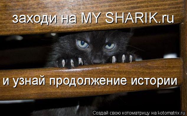 Котоматрица: заходи на MY SHARIK.ru и узнай продолжение истории