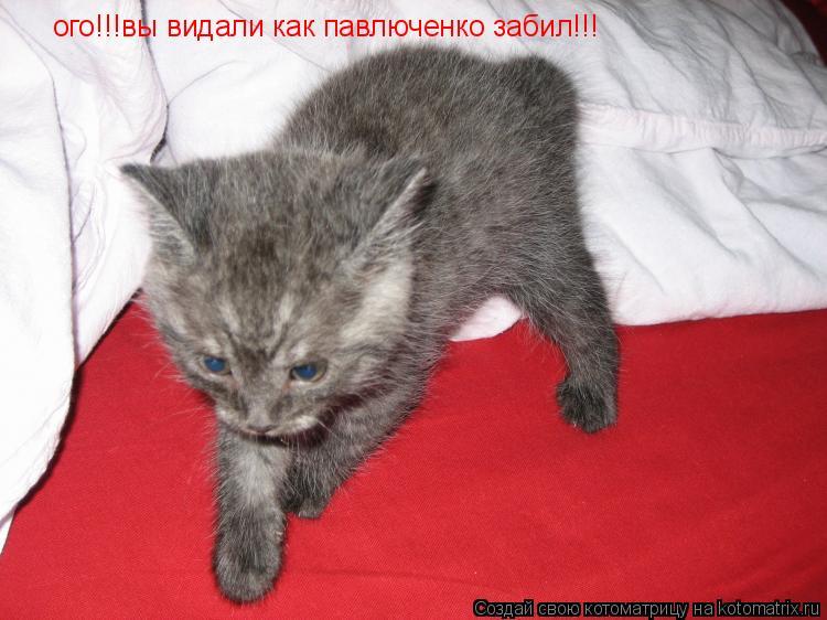 Котоматрица: ого!!!вы видали как павлюченко забил!!!