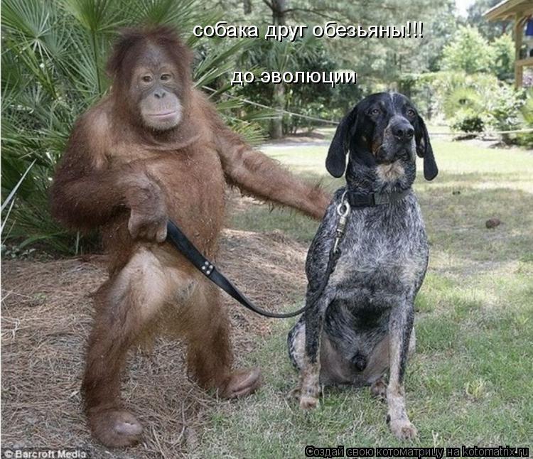 Котоматрица: собака друг обезьяны!!! до эволюции