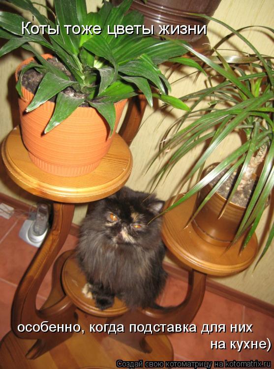 Котоматрица: Коты тоже цветы жизни особенно, когда подставка для них на кухне)