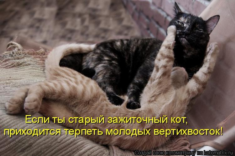 Котоматрица: Если ты старый зажиточный кот, приходится терпеть молодых вертихвосток!