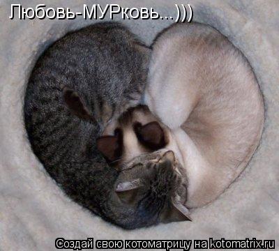 Котоматрица: Любовь-МУРковь...)))