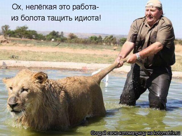 Котоматрица: Ох, нелёгкая это работа- из болота тащить идиота!