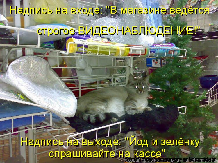 http://kotomatrix.ru/images/lolz/2010/11/27/750043.jpg
