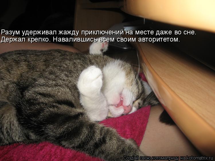 Котоматрица: Разум удерживал жажду приключений на месте даже во сне. Держал крепко. Навалившись всем своим авторитетом.