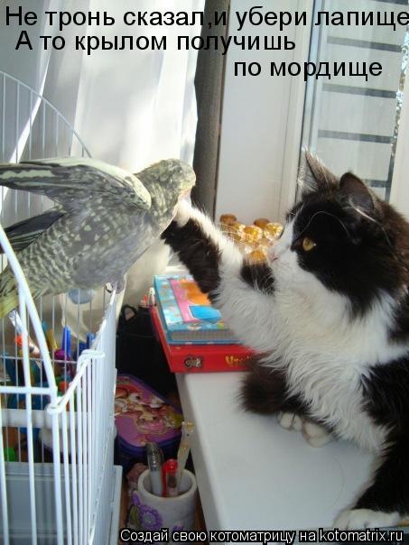Котоматрица: Не тронь сказал,и убери лапище А то крылом получишь  по мордище