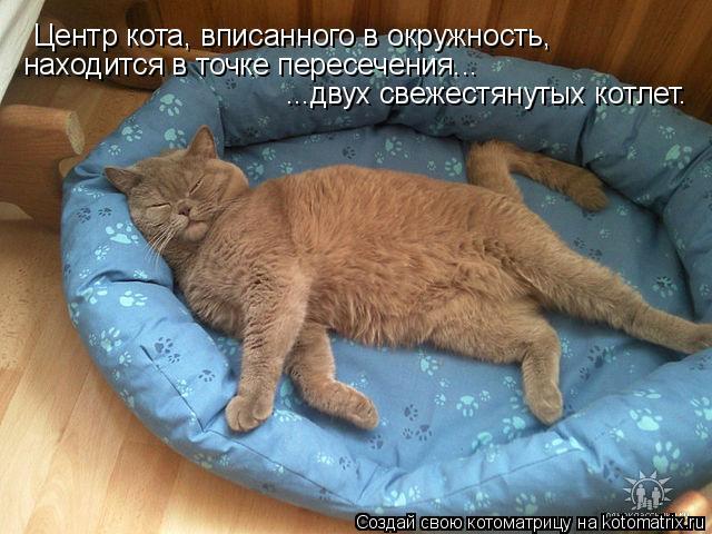 Котоматрица: Центр кота, вписанного в окружность, находится в точке пересечения... ...двух свежестянутых котлет.