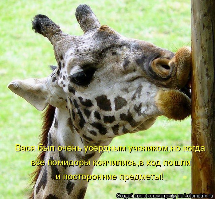 Котоматрица: Вася был очень усердным учеником,но когда все помидоры кончились,в ход пошли и посторонние предметы!