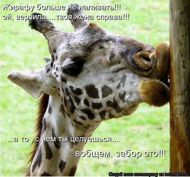 Котоматрица: Жирафу больше не наливать!!! эй, верзила....твоя жена справа!!! ...а то , с чем ты целуешься.... вобщем, забор это!!!
