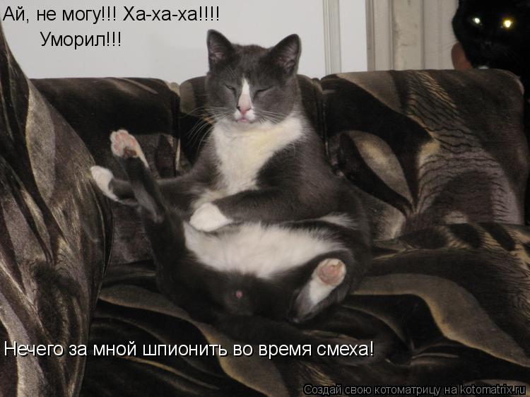 Котоматрица: Ай, не могу!!! Ха-ха-ха!!!! Уморил!!! Нечего за мной шпионить во время смеха!